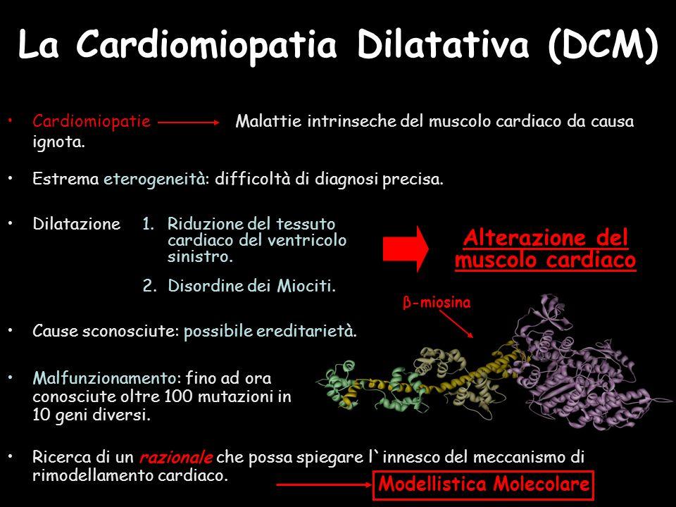 La Cardiomiopatia Dilatativa (DCM) Cardiomiopatie Malattie intrinseche del muscolo cardiaco da causa ignota. Estrema eterogeneità: difficoltà di diagn