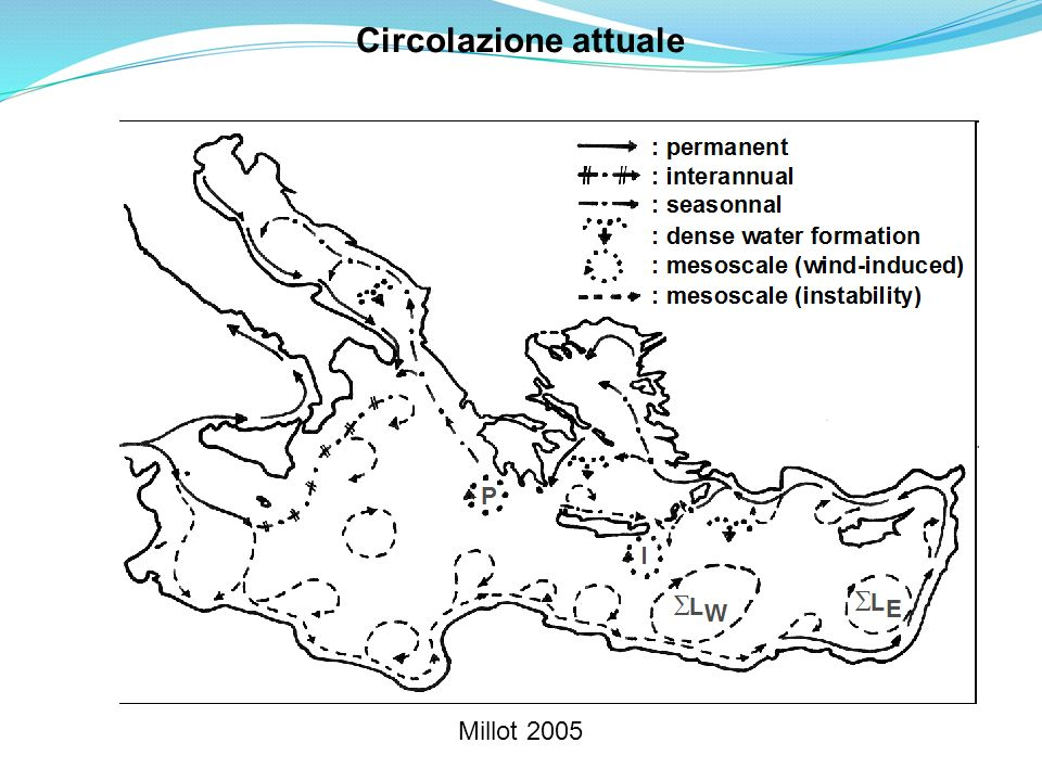 Circolazione attuale Millot 2005