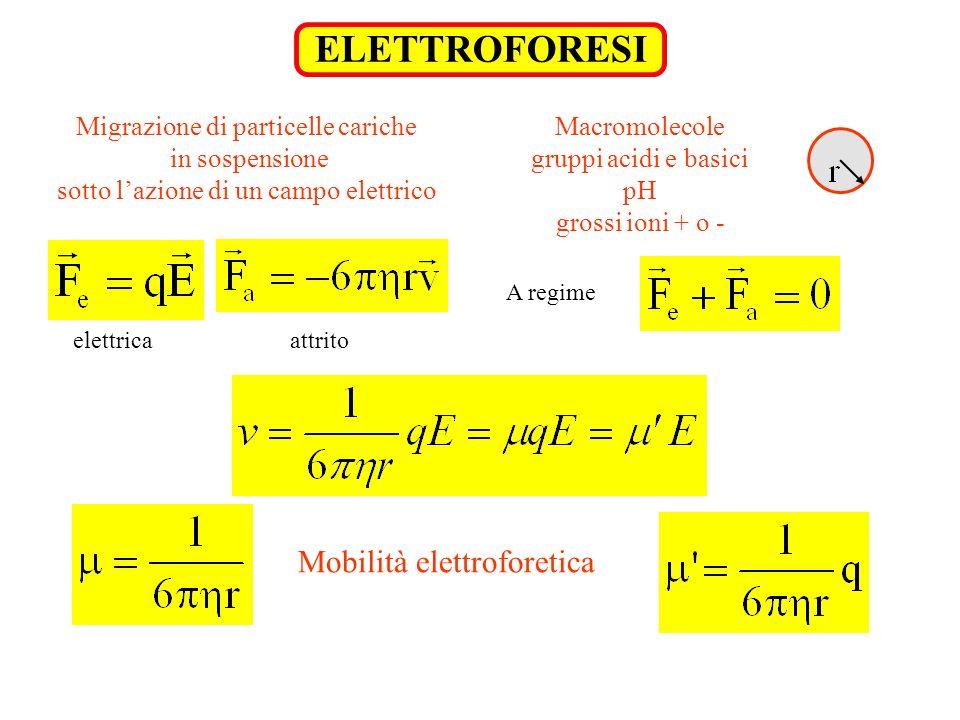 ELETTROFORESI Migrazione di particelle cariche in sospensione sotto lazione di un campo elettrico Macromolecole gruppi acidi e basici pH grossi ioni +