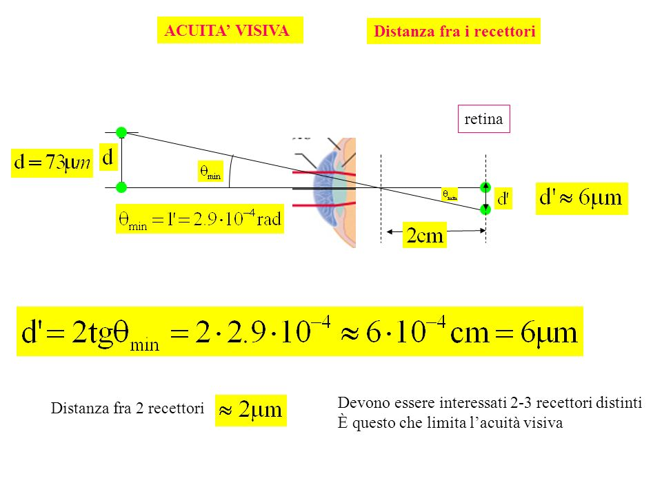 ACUITA VISIVA Distanza fra i recettori Distanza fra 2 recettori Devono essere interessati 2-3 recettori distinti È questo che limita lacuità visiva re