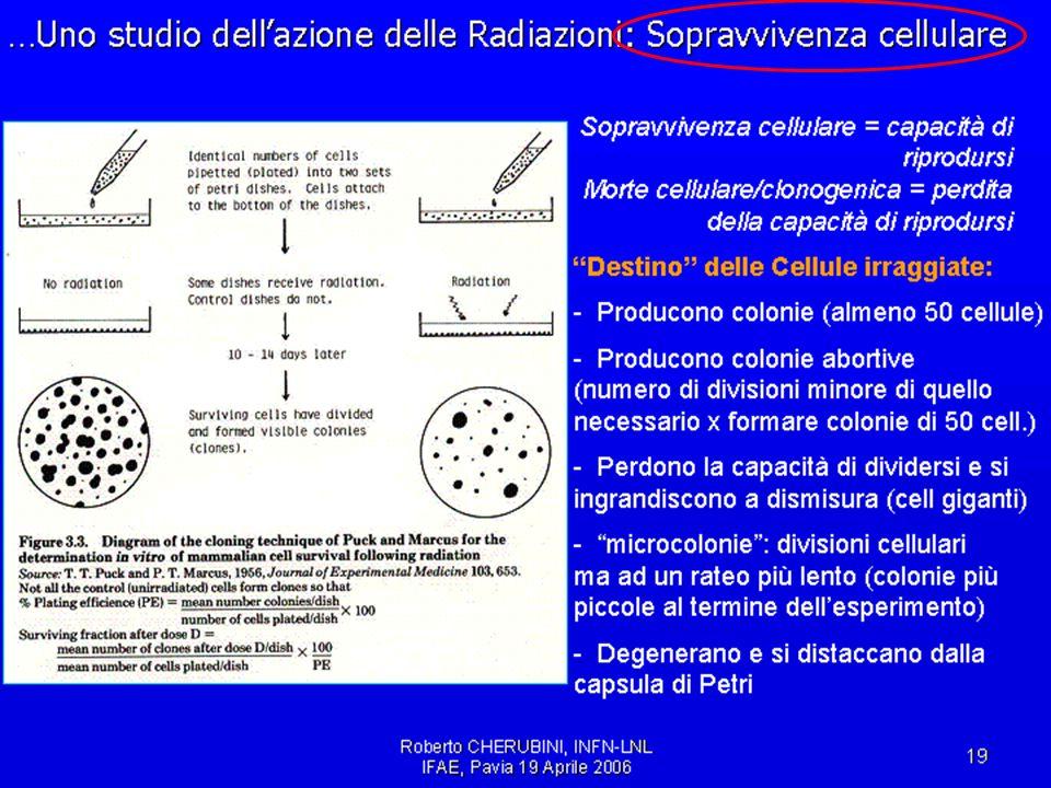 IFAE2006, Pavia, 21/4/2006Cardini, Michelotto, Rosso50