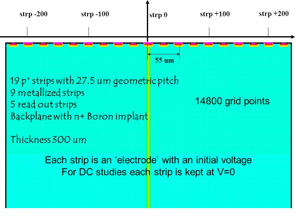 strp 0 strp +100 strp +200 strp -100 strp -200 55 um 19 p + strips with 27.5 um geometric pitch 9 metallized strips 5 read out strips Backplane with n+ Boron implant Thickness 300 um Each strip is an electrode with an initial voltage For DC studies each strip is kept at V=0 14800 grid points