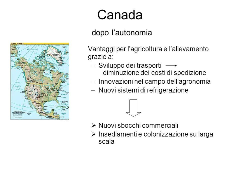 Canada dopo lautonomia Vantaggi per lagricoltura e lallevamento grazie a: –Sviluppo dei trasporti diminuzione dei costi di spedizione –Innovazioni nel