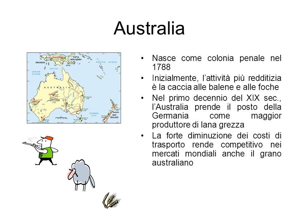 Australia Nasce come colonia penale nel 1788 Inizialmente, lattività più redditizia è la caccia alle balene e alle foche Nel primo decennio del XIX se
