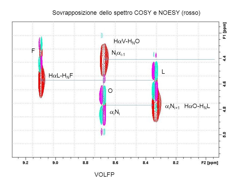 F O L F Sovrapposizione dello spettro COSY e NOESY (rosso) VOLFP i N i i N i+1 N i i-1 H L-H N F H V-H N O H O-H N L