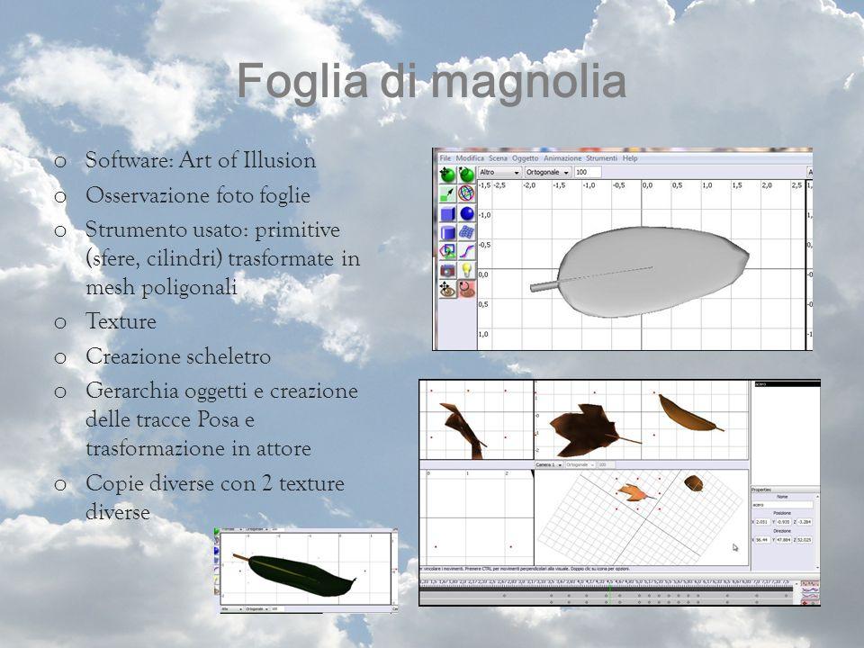 Foglia di magnolia o Software: Art of Illusion o Osservazione foto foglie o Strumento usato: primitive (sfere, cilindri) trasformate in mesh poligonal