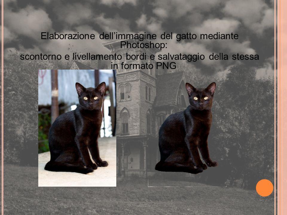 Elaborazione dellimmagine del gatto mediante Photoshop: scontorno e livellamento bordi e salvataggio della stessa in formato PNG