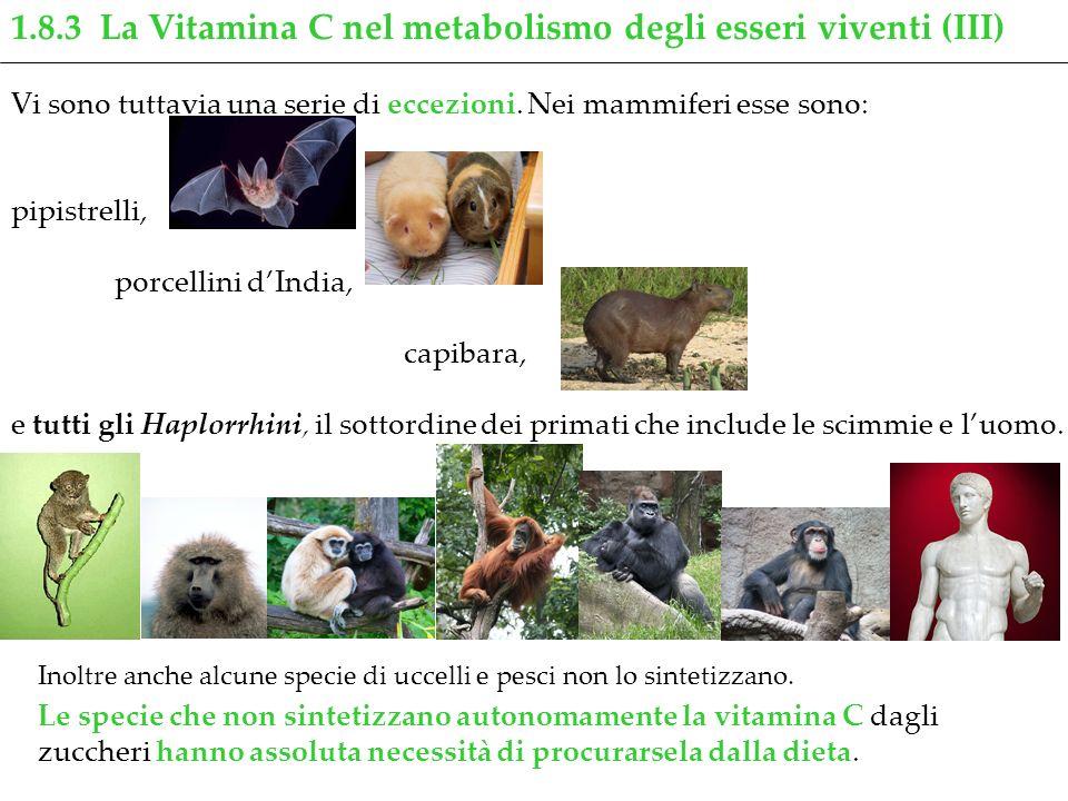 1.8.3 La Vitamina C nel metabolismo degli esseri viventi (III) Inoltre anche alcune specie di uccelli e pesci non lo sintetizzano. Le specie che non s