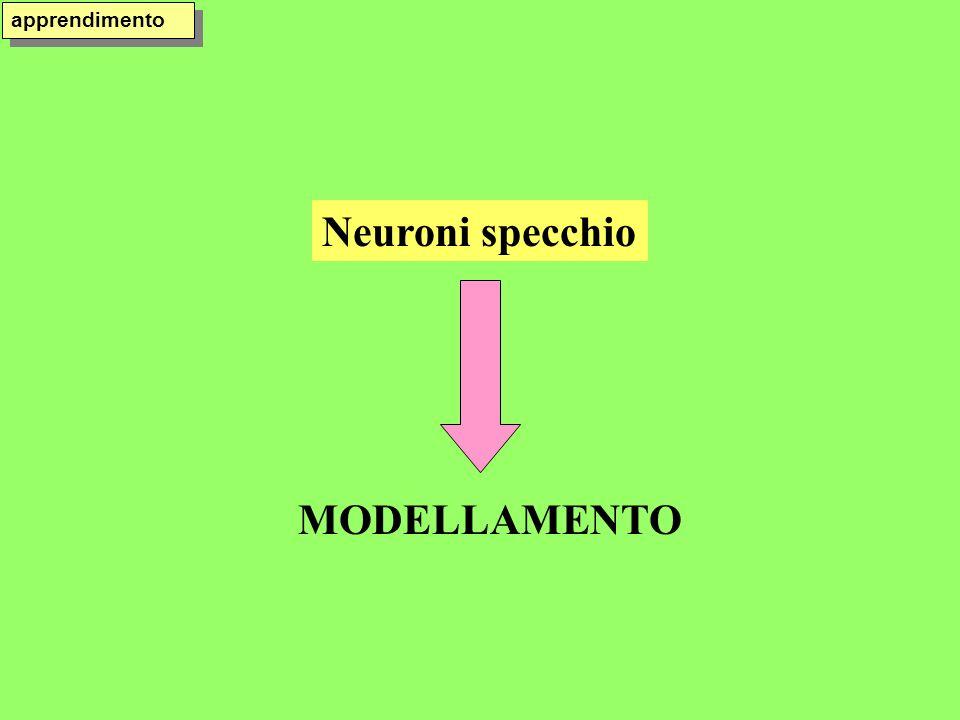 Neuroni specchio MODELLAMENTO apprendimento