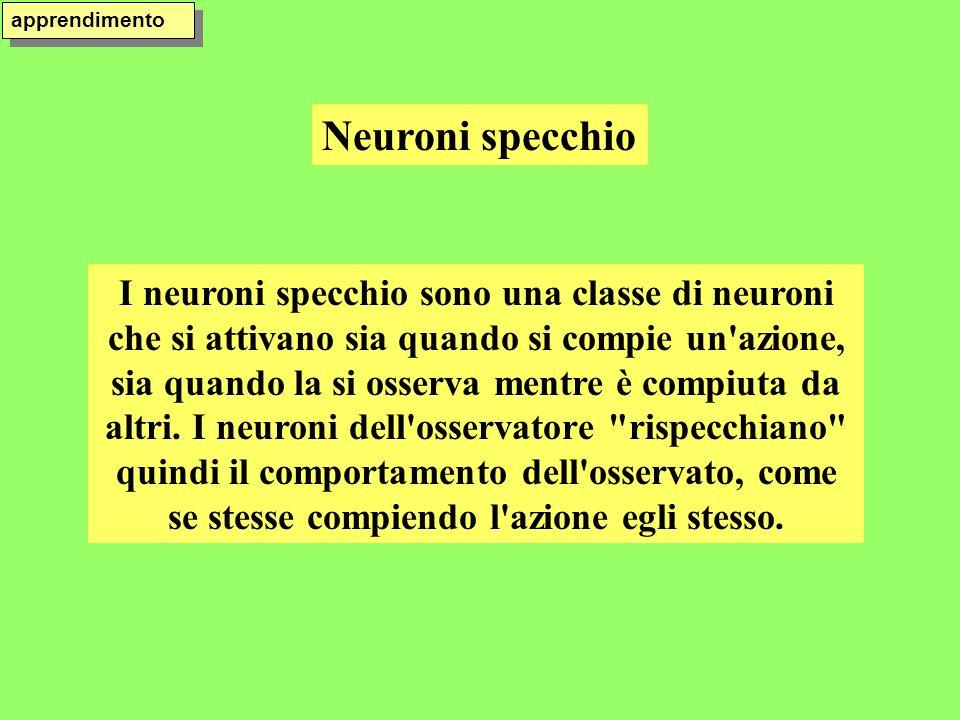 Neuroni specchio apprendimento I neuroni specchio sono una classe di neuroni che si attivano sia quando si compie un'azione, sia quando la si osserva