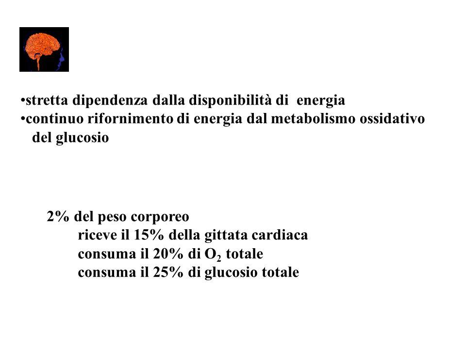 stretta dipendenza dalla disponibilità di energia continuo rifornimento di energia dal metabolismo ossidativo del glucosio 2% del peso corporeo riceve
