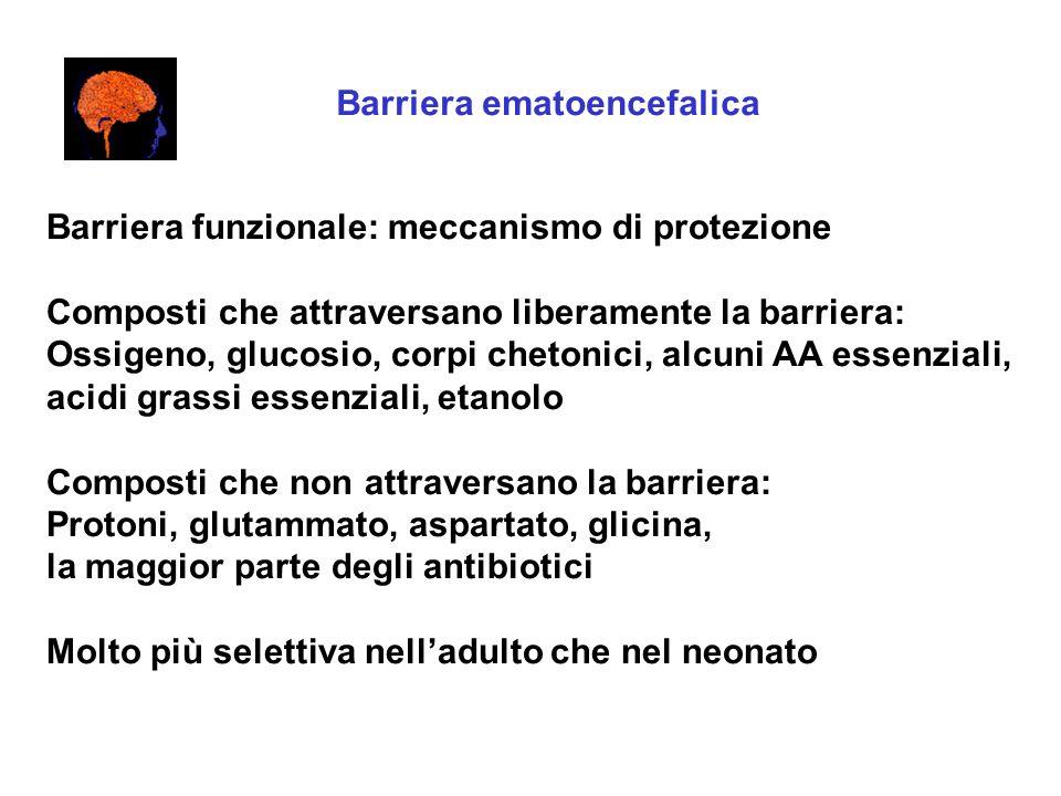 Barriera ematoencefalica Barriera funzionale: meccanismo di protezione Composti che attraversano liberamente la barriera: Ossigeno, glucosio, corpi ch