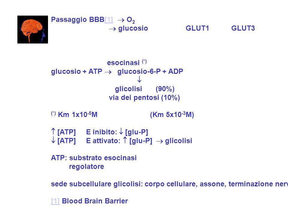 Passaggio BBB[1] O 2[1] glucosio GLUT1 GLUT3 esocinasi (*) glucosio + ATP glucosio-6-P + ADP glicolisi (90%) via dei pentosi (10%) (*) Km 1x10 -5 M (K
