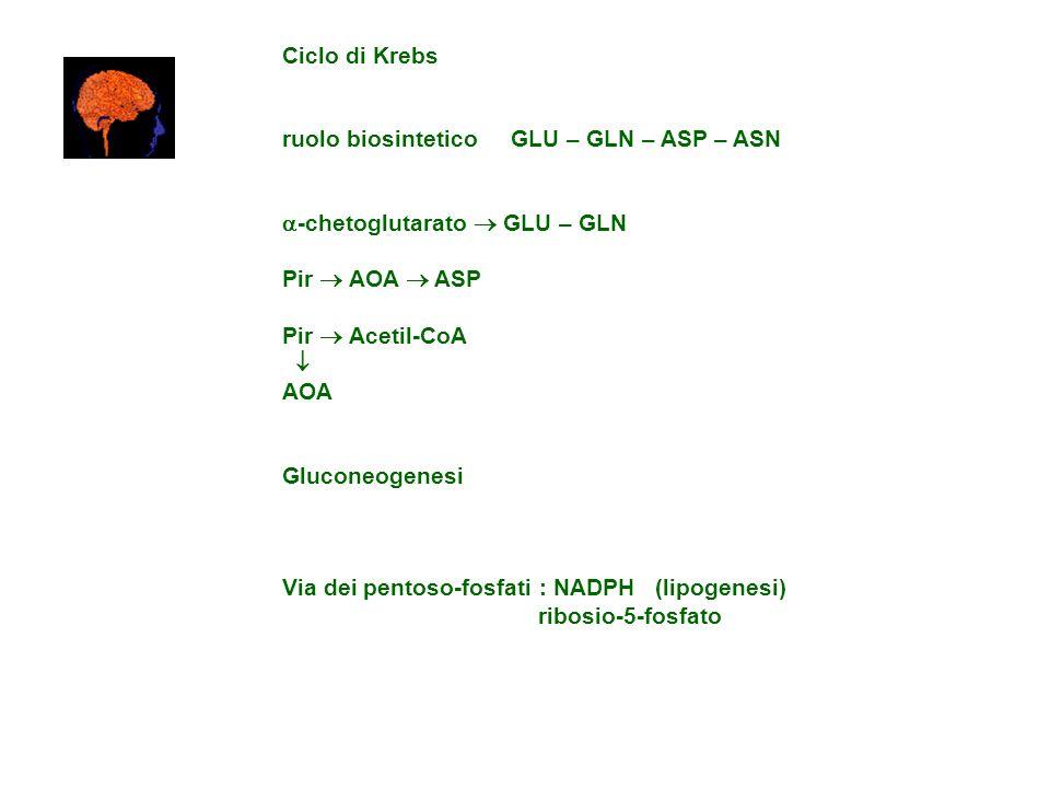 Ciclo di Krebs ruolo biosintetico GLU – GLN – ASP – ASN -chetoglutarato GLU – GLN Pir AOA ASP Pir Acetil-CoA AOA Gluconeogenesi Via dei pentoso-fosfat