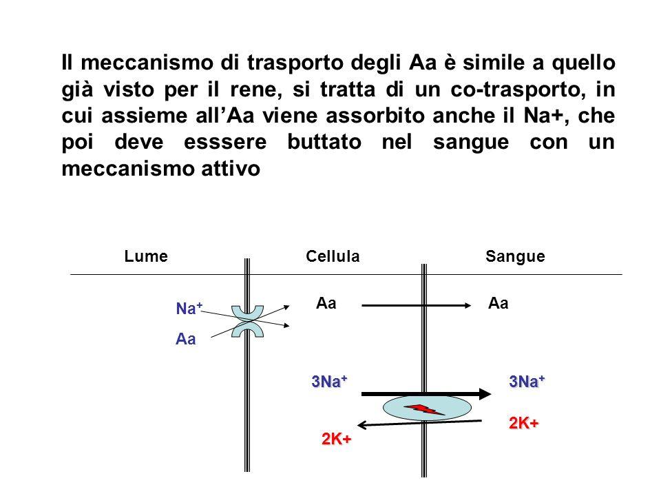 LumeCellulaSangue Na + Aa 3Na + 2K+2K+ Il meccanismo di trasporto degli Aa è simile a quello già visto per il rene, si tratta di un co-trasporto, in c