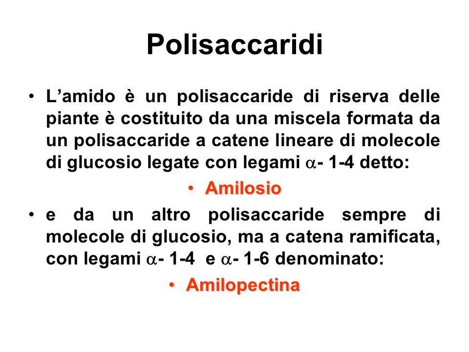Polisaccaridi Lamido è un polisaccaride di riserva delle piante è costituito da una miscela formata da un polisaccaride a catene lineare di molecole d