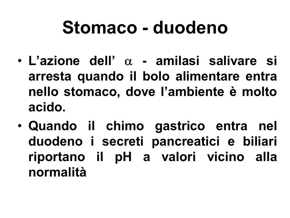 Stomaco - duodeno Lazione dell - amilasi salivare si arresta quando il bolo alimentare entra nello stomaco, dove lambiente è molto acido. Quando il ch