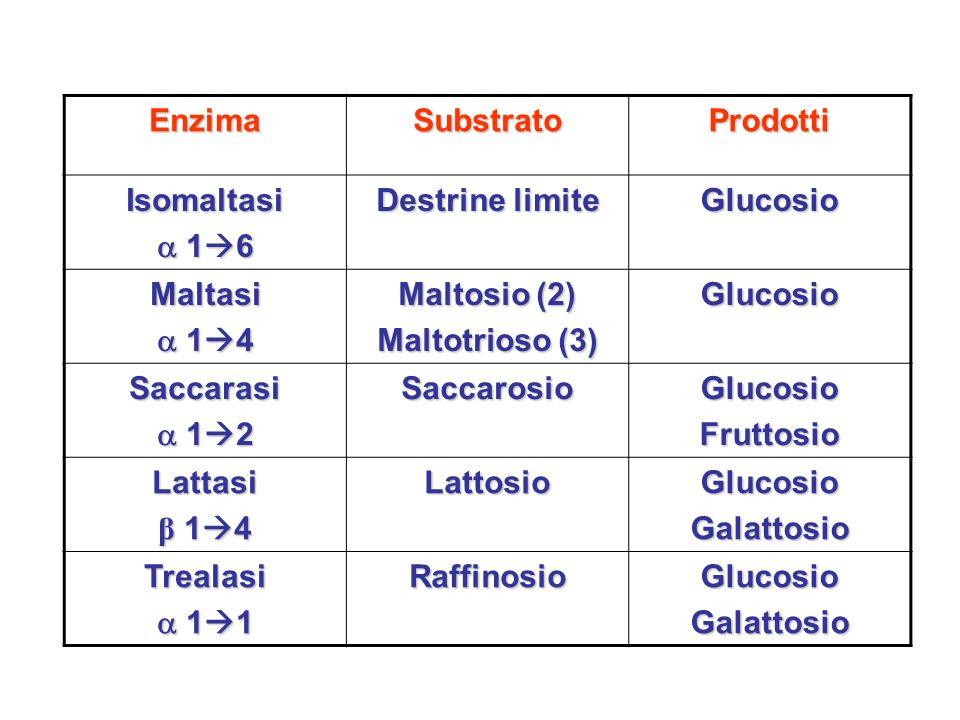 EnzimaSubstratoProdotti Isomaltasi 1 6 1 6 Destrine limite Glucosio Maltasi 1 4 1 4 Maltosio (2) Maltotrioso (3) Glucosio Saccarasi 1 2 1 2SaccarosioG