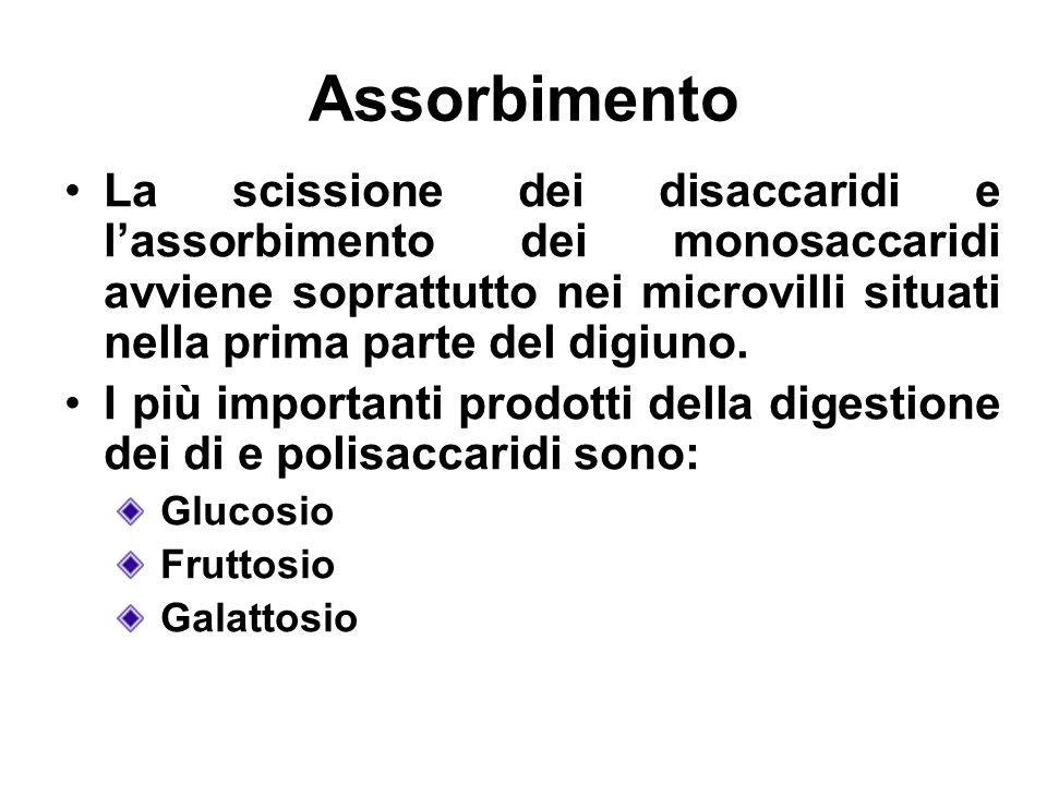 Assorbimento La scissione dei disaccaridi e lassorbimento dei monosaccaridi avviene soprattutto nei microvilli situati nella prima parte del digiuno.