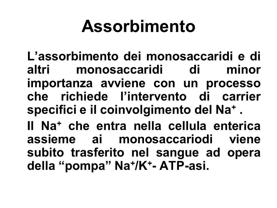 Assorbimento Lassorbimento dei monosaccaridi e di altri monosaccaridi di minor importanza avviene con un processo che richiede lintervento di carrier