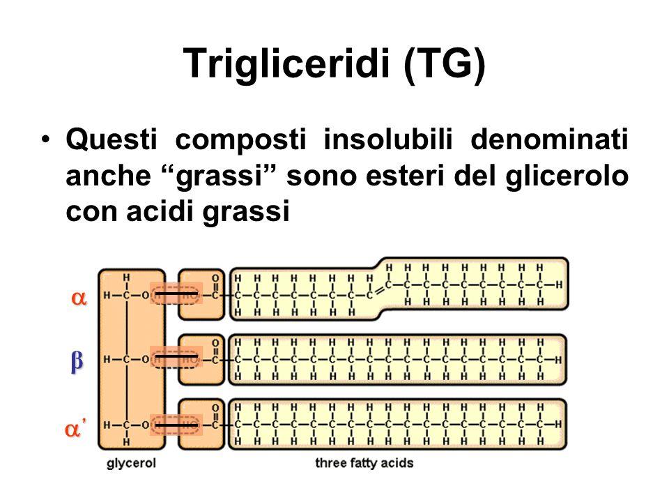 Trigliceridi (TG) Questi composti insolubili denominati anche grassi sono esteri del glicerolo con acidi grassi β