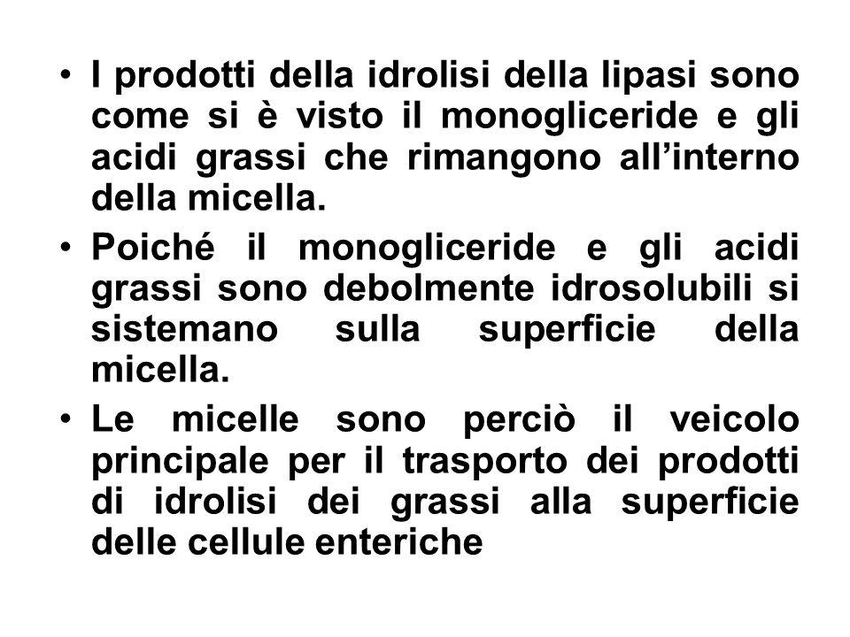 I prodotti della idrolisi della lipasi sono come si è visto il monogliceride e gli acidi grassi che rimangono allinterno della micella. Poiché il mono