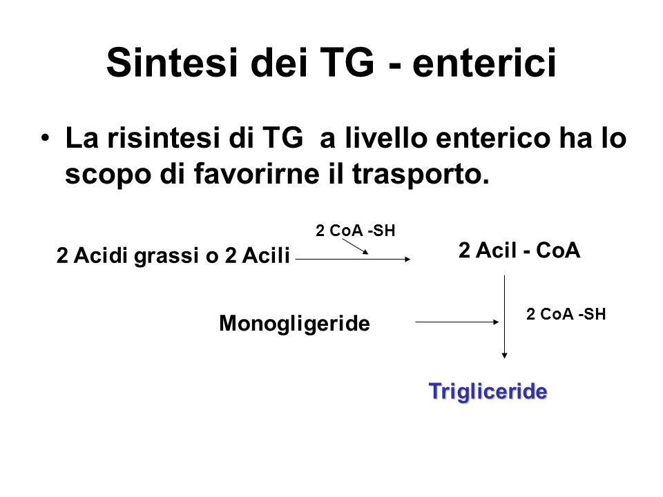 Sintesi dei TG - enterici La risintesi di TG a livello enterico ha lo scopo di favorirne il trasporto. 2 Acidi grassi o 2 Acili 2 CoA -SH 2 Acil - CoA