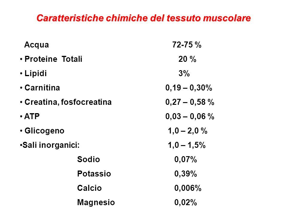 Caratteristiche chimiche del tessuto muscolare Acqua 72-75 % Proteine Totali 20 % Lipidi 3% Carnitina 0,19 – 0,30% Creatina, fosfocreatina 0,27 – 0,58