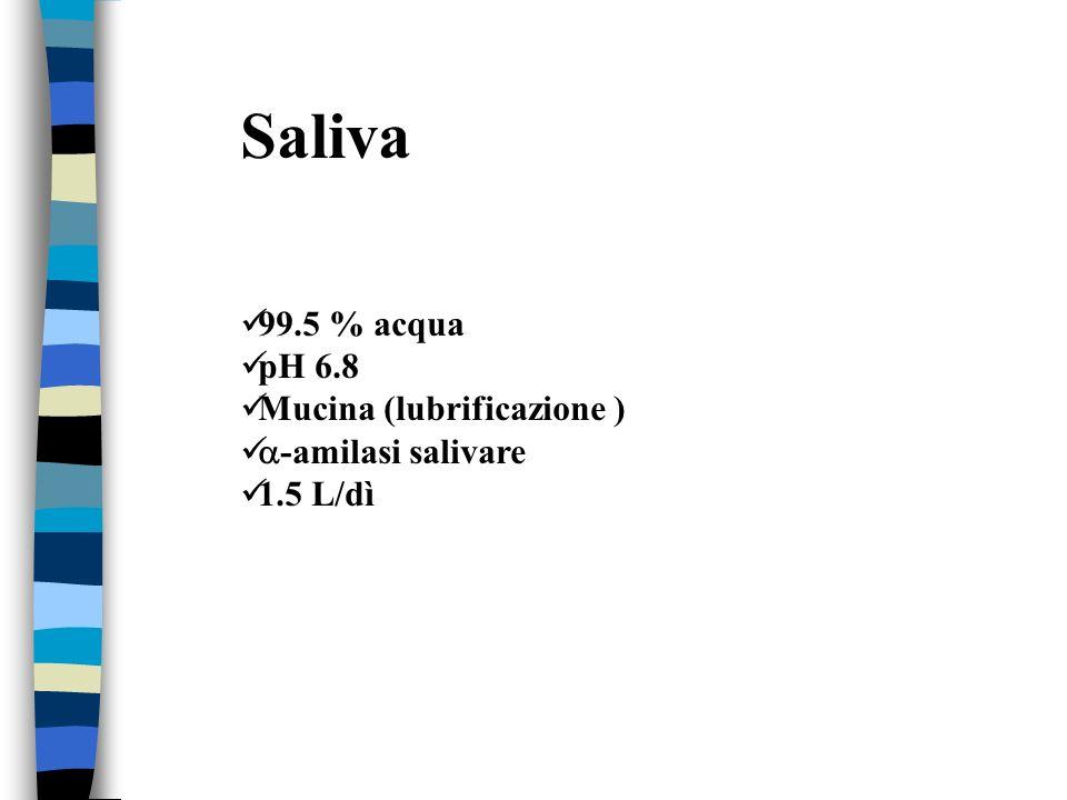 Saliva 99.5 % acqua pH 6.8 Mucina (lubrificazione ) -amilasi salivare 1.5 L/dì
