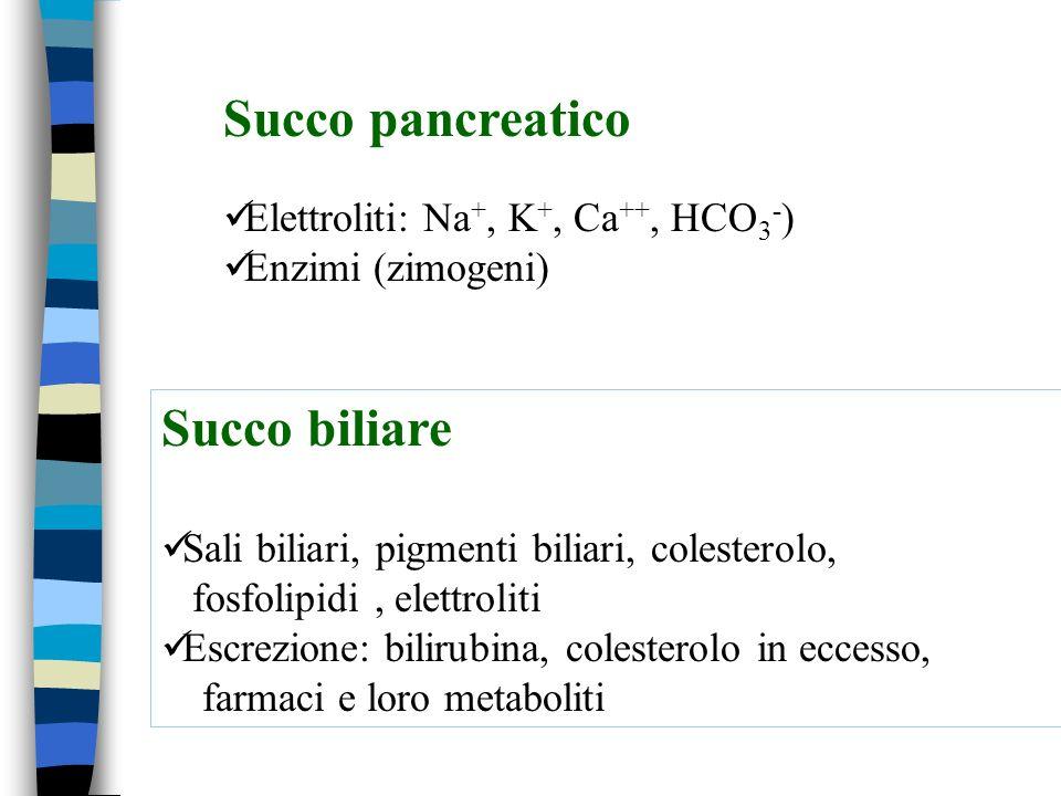 Succo pancreatico Elettroliti: Na +, K +, Ca ++, HCO 3 - ) Enzimi (zimogeni) Succo biliare Sali biliari, pigmenti biliari, colesterolo, fosfolipidi, elettroliti Escrezione: bilirubina, colesterolo in eccesso, farmaci e loro metaboliti