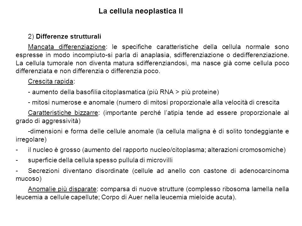 2) Differenze strutturali Mancata differenziazione: le specifiche caratteristiche della cellula normale sono espresse in modo incompiuto-si parla di a