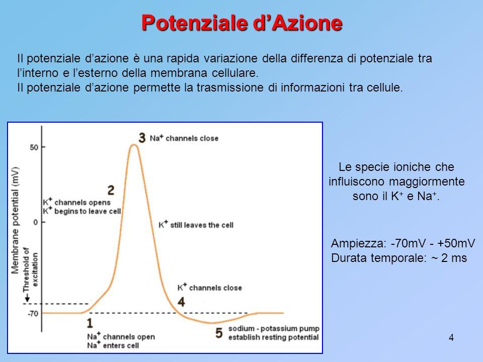 4 Potenziale dAzione Il potenziale dazione è una rapida variazione della differenza di potenziale tra linterno e lesterno della membrana cellulare. Il