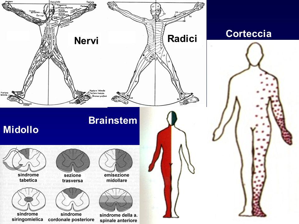 Nervi Radici Midollo Brainstem Corteccia