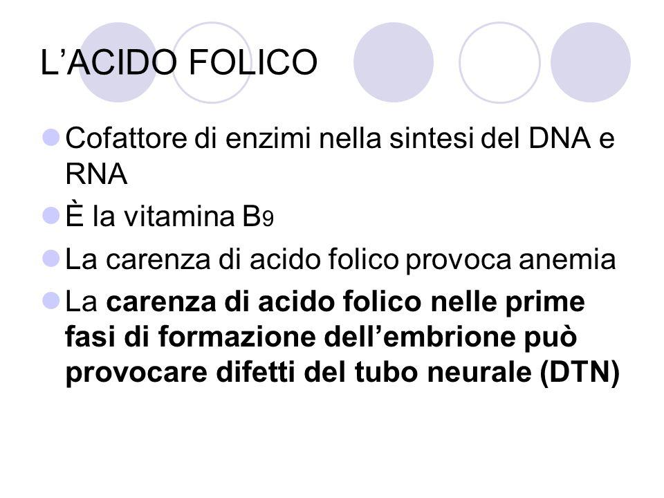 LACIDO FOLICO Cofattore di enzimi nella sintesi del DNA e RNA È la vitamina B 9 La carenza di acido folico provoca anemia La carenza di acido folico n