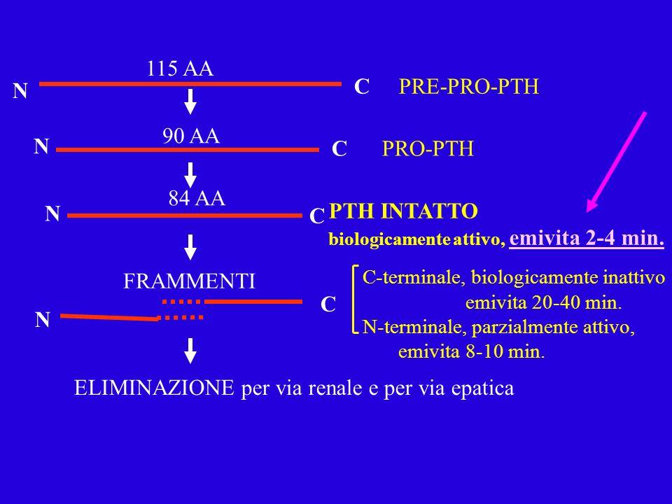 N PTH INTATTO biologicamente attivo, emivita 2-4 min. ELIMINAZIONE per via renale e per via epatica N N N C C C C 115 AA 90 AA 84 AA PRE-PRO-PTH PRO-P