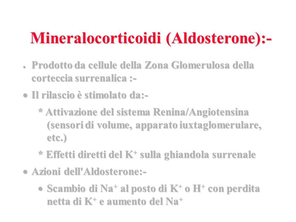 Prodotto da cellule della Zona Glomerulosa della corteccia surrenalica :- Prodotto da cellule della Zona Glomerulosa della corteccia surrenalica :- Il rilascio è stimolato da:- Il rilascio è stimolato da:- * Attivazione del sistema Renina/Angiotensina (sensori di volume, apparato iuxtaglomerulare, etc.) * Effetti diretti del K + sulla ghiandola surrenale Azioni dell Aldosterone:- Azioni dell Aldosterone:- Scambio di Na + al posto di K + o H + con perdita netta di K + e aumento del Na + Scambio di Na + al posto di K + o H + con perdita netta di K + e aumento del Na + Mineralocorticoidi (Aldosterone):-