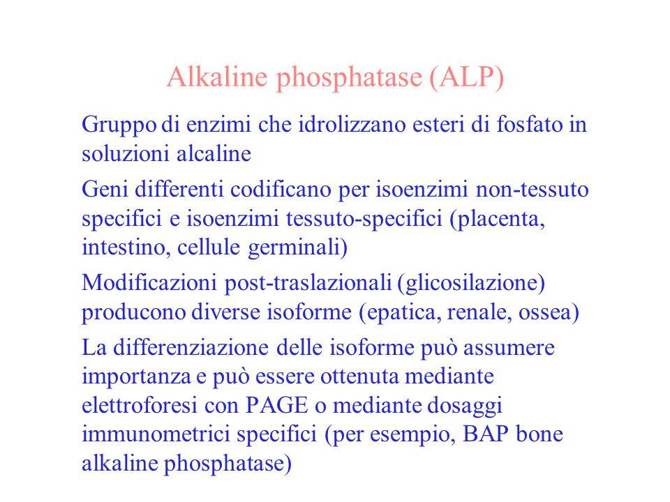 Alkaline phosphatase (ALP) Gruppo di enzimi che idrolizzano esteri di fosfato in soluzioni alcaline Geni differenti codificano per isoenzimi non-tessu
