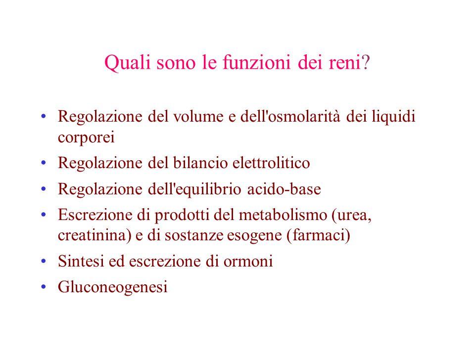 Quali sono le funzioni dei reni? Regolazione del volume e dell'osmolarità dei liquidi corporei Regolazione del bilancio elettrolitico Regolazione dell