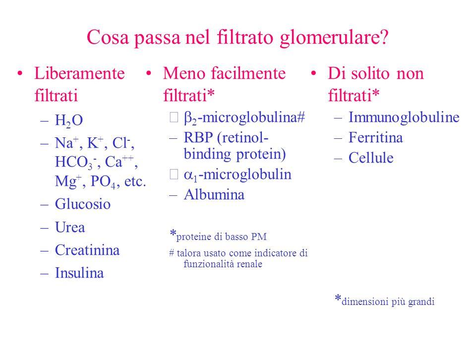 Cosa passa nel filtrato glomerulare? Liberamente filtrati –H 2 O –Na +, K +, Cl -, HCO 3 -, Ca ++, Mg +, PO 4, etc. –Glucosio –Urea –Creatinina –Insul