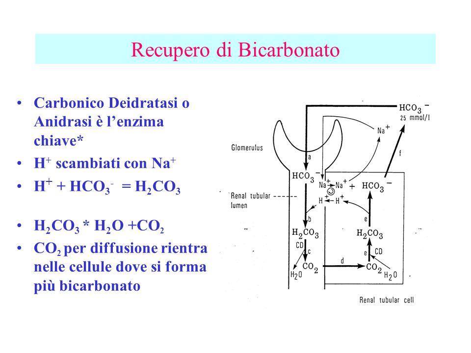 Recupero di Bicarbonato Carbonico Deidratasi o Anidrasi è lenzima chiave* H + scambiati con Na + H + + HCO 3 - = H 2 CO 3 H 2 CO 3 * H 2 O +CO 2 CO 2