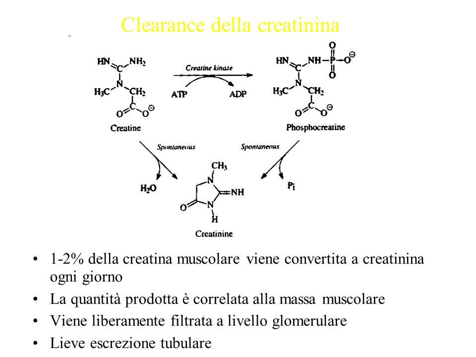 1-2% della creatina muscolare viene convertita a creatinina ogni giorno La quantità prodotta è correlata alla massa muscolare Viene liberamente filtra
