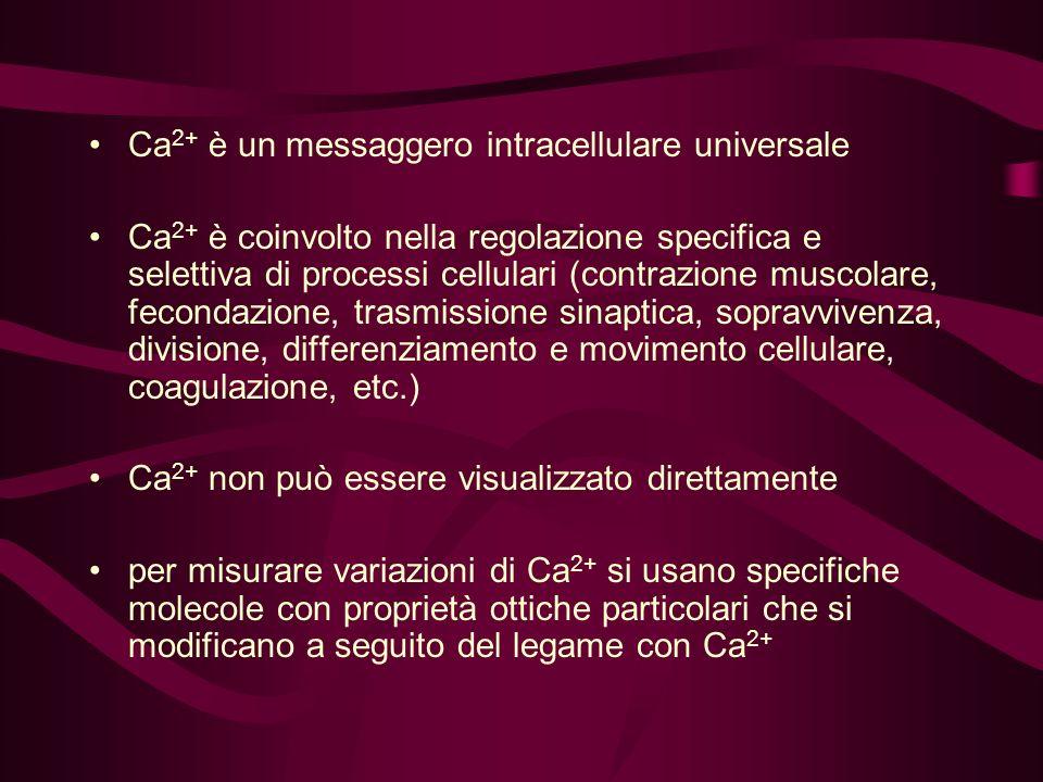 Ca 2+ è un messaggero intracellulare universale Ca 2+ è coinvolto nella regolazione specifica e selettiva di processi cellulari (contrazione muscolare