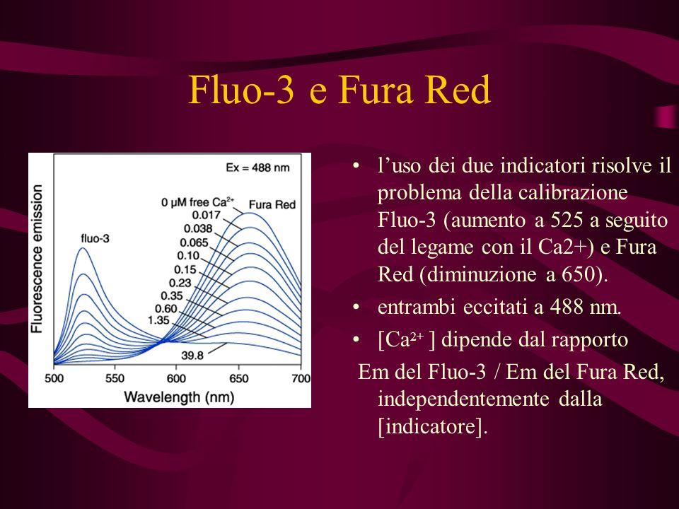 Fluo-3 e Fura Red luso dei due indicatori risolve il problema della calibrazione Fluo-3 (aumento a 525 a seguito del legame con il Ca2+) e Fura Red (d
