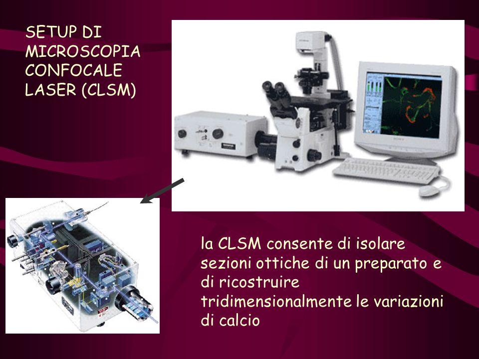 SETUP DI MICROSCOPIA CONFOCALE LASER (CLSM) la CLSM consente di isolare sezioni ottiche di un preparato e di ricostruire tridimensionalmente le variaz