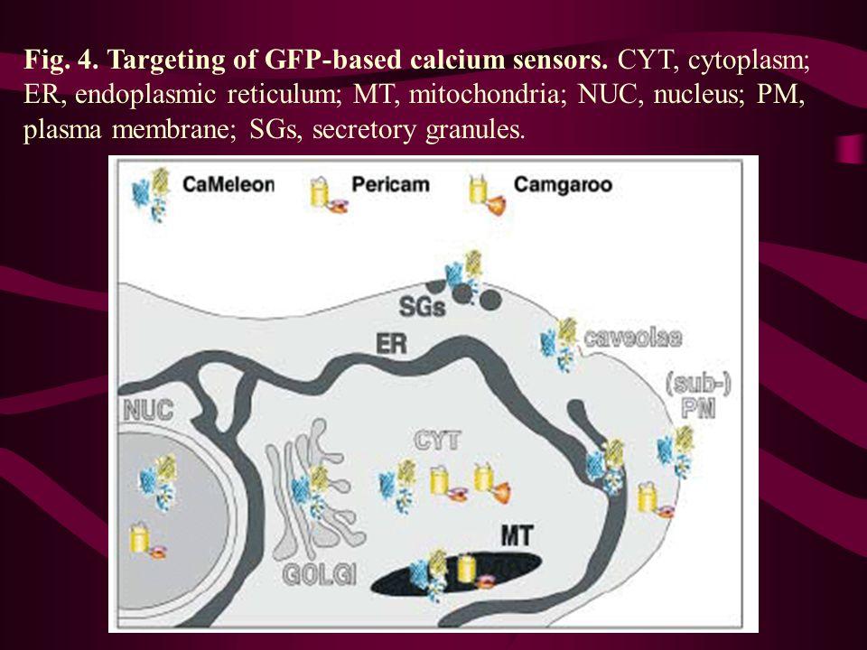 Fig. 4. Targeting of GFP-based calcium sensors. CYT, cytoplasm; ER, endoplasmic reticulum; MT, mitochondria; NUC, nucleus; PM, plasma membrane; SGs, s