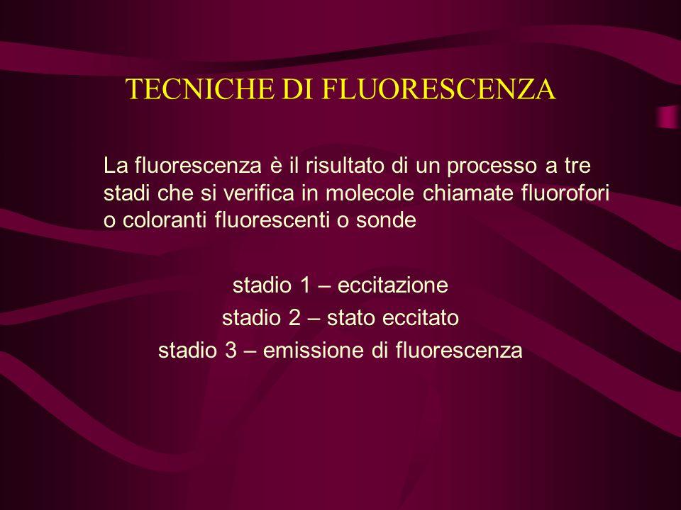 TECNICHE DI FLUORESCENZA La fluorescenza è il risultato di un processo a tre stadi che si verifica in molecole chiamate fluorofori o coloranti fluores