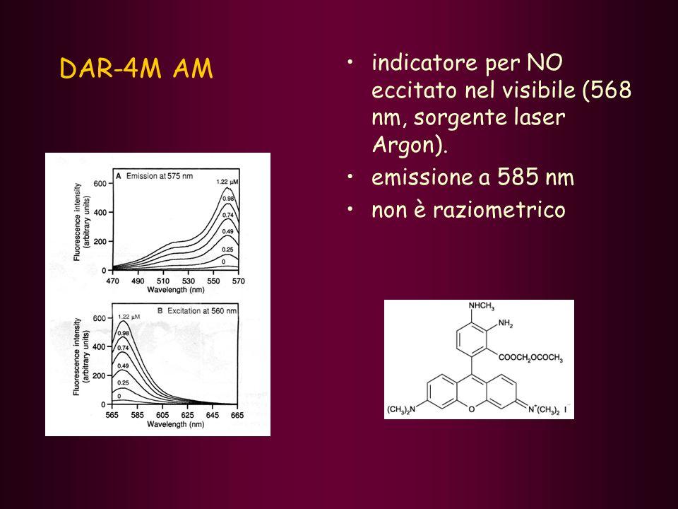 DAR-4M AM indicatore per NO eccitato nel visibile (568 nm, sorgente laser Argon). emissione a 585 nm non è raziometrico