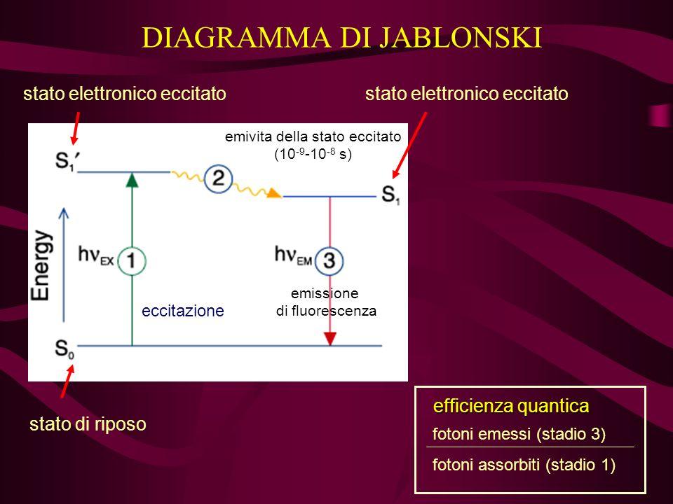DIAGRAMMA DI JABLONSKI stato di riposo stato elettronico eccitato eccitazione emivita della stato eccitato (10 -9 -10 -8 s) emissione di fluorescenza