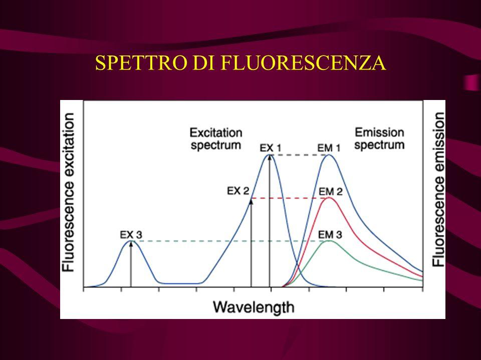 STRUMENTAZIONE Sistemi di rivelazione della fluorescenza sorgente di eccitazione fluoroforo filtri rivelatore Tipi di strumenti spettrofluorimetro microscopio in fluorescenza citometro a flusso