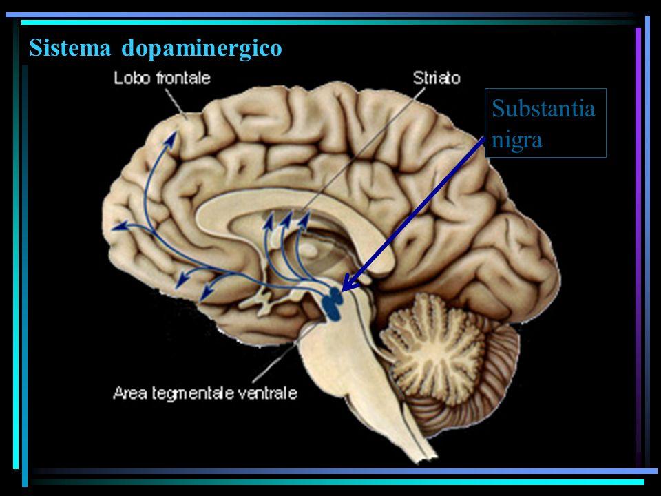 Sistema dopaminergico Substantia nigra